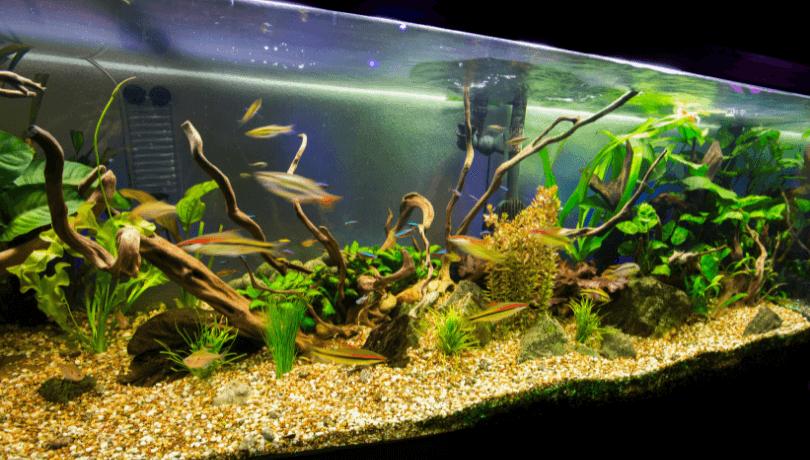 osvětlení akvária